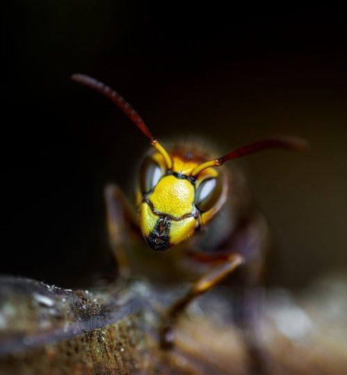wasp 5